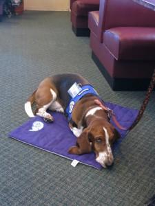 Dog Therapy Presentation 014